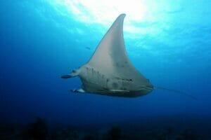 commercial fishing ban Palau