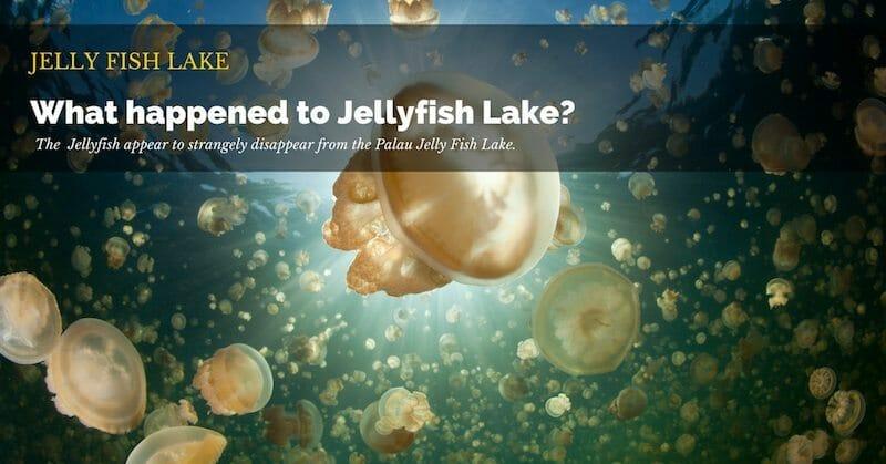 Palau Jelly fish lake