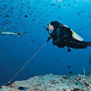 5 Reasons to Use a Reef Hook When Diving in Palau [Infographic]