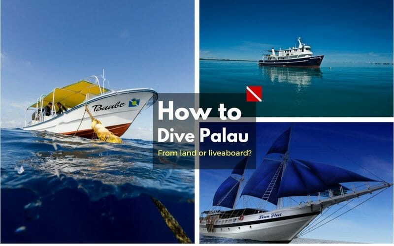What is The Best Way to Dive Palau? | Liveaboard or Land-Based?