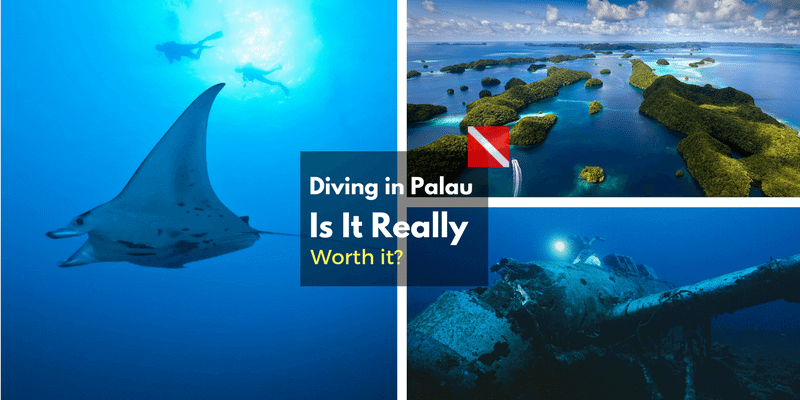 Diving Trip to Palau