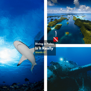 Is a Diving Trip to Palau Really Worth It?